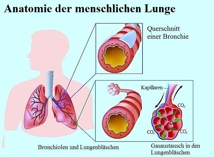 Von erwachsene husten asthma symptome