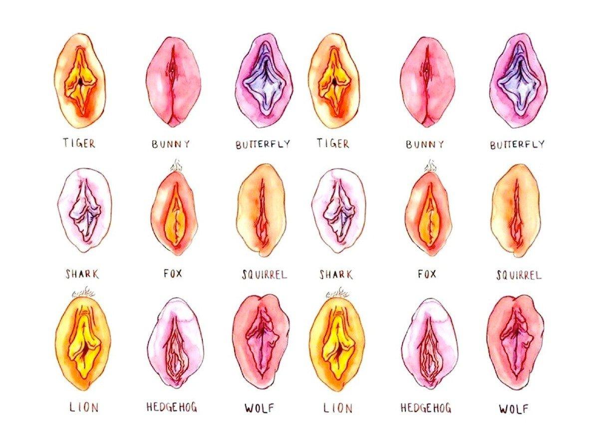 Vagina unterschiedliche eine namen fur