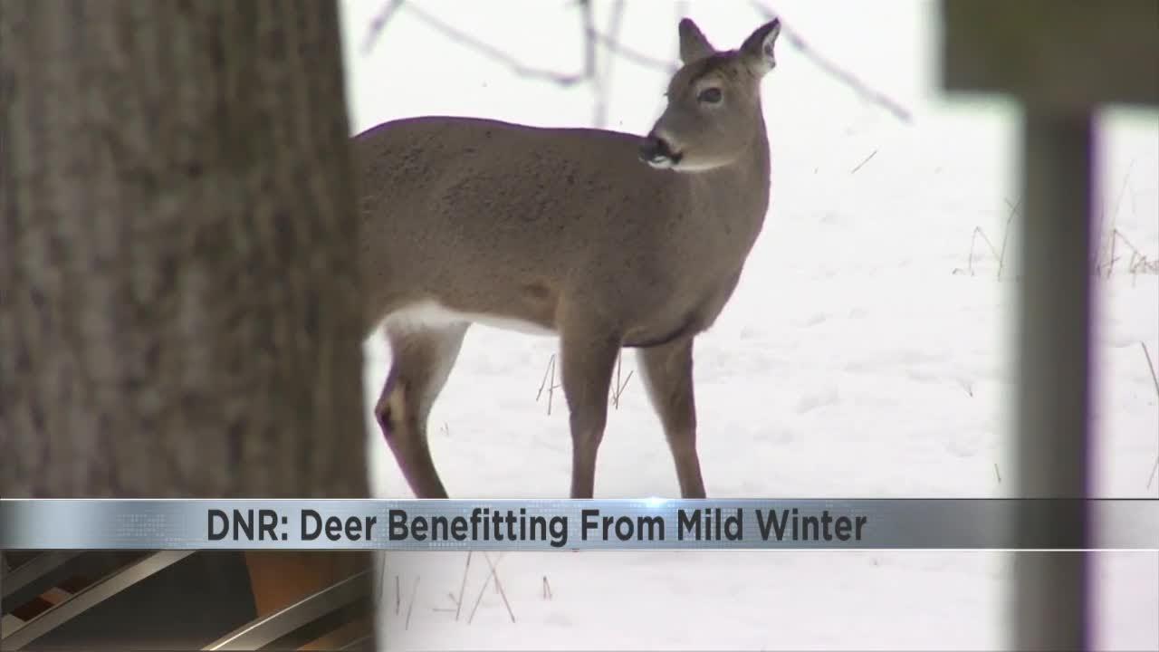 Oh farm brunswick deer lick
