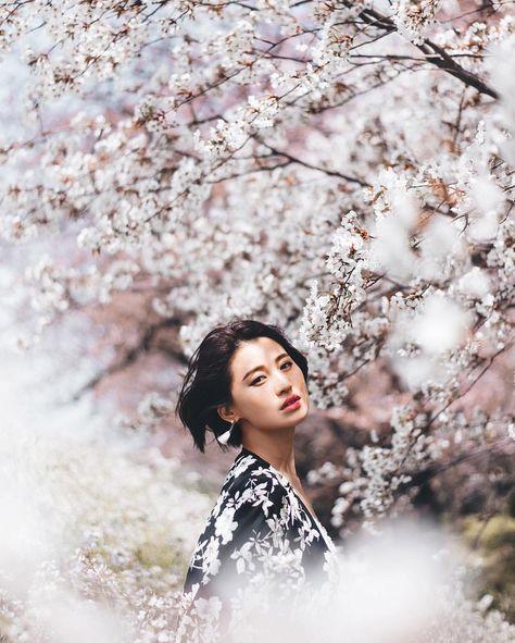 Blossom mag cherry ms beute
