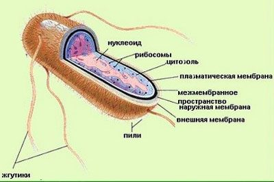 Bei erwachsenen vergiftung symptome tylenol