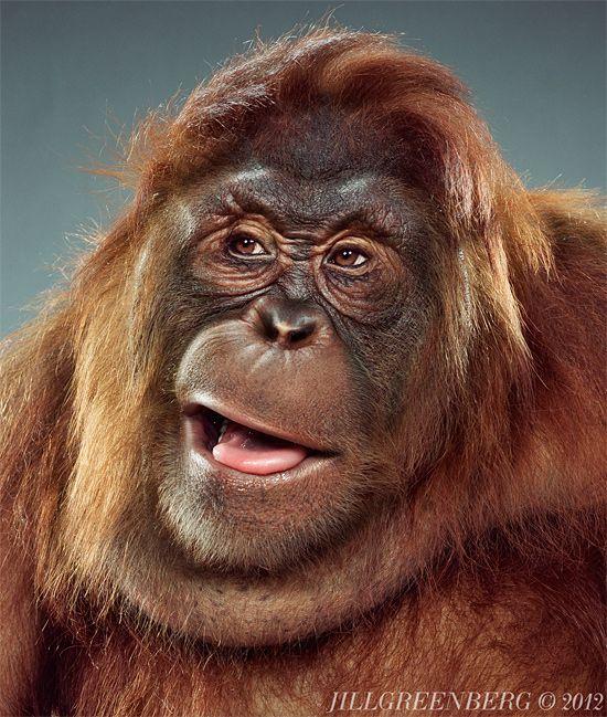Girls sex gorillas nackte mit den