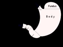 Pylorus stenose erwachsener in der
