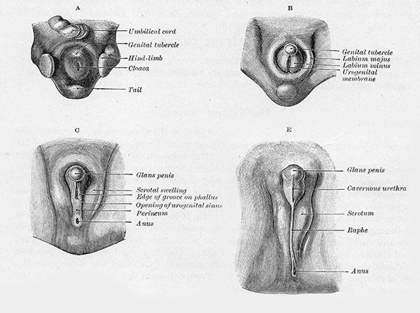 Penis unterseite weh des tut